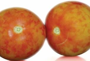 Россельхознадзор, Иркутск, томаты, заражённые томаты, вирус мозаики пепино