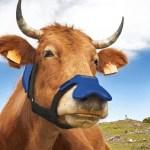 Zelp, нейтрализатор метана, маска Zelp, коровья маска, уловитель метана, экология