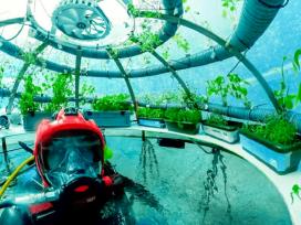 Nemo's Garden, Ocean Reef Group, Италия, теплицы под водой, подводный сад