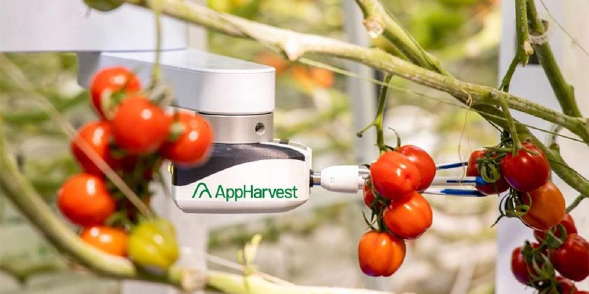 AppHarvest, экоовощи, роботы, теплица, искусственный интеллект