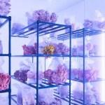Smallhold, ультрафиолет, вешенки, грибы