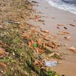 Сахалин, циклон, морские черви, морепродукты