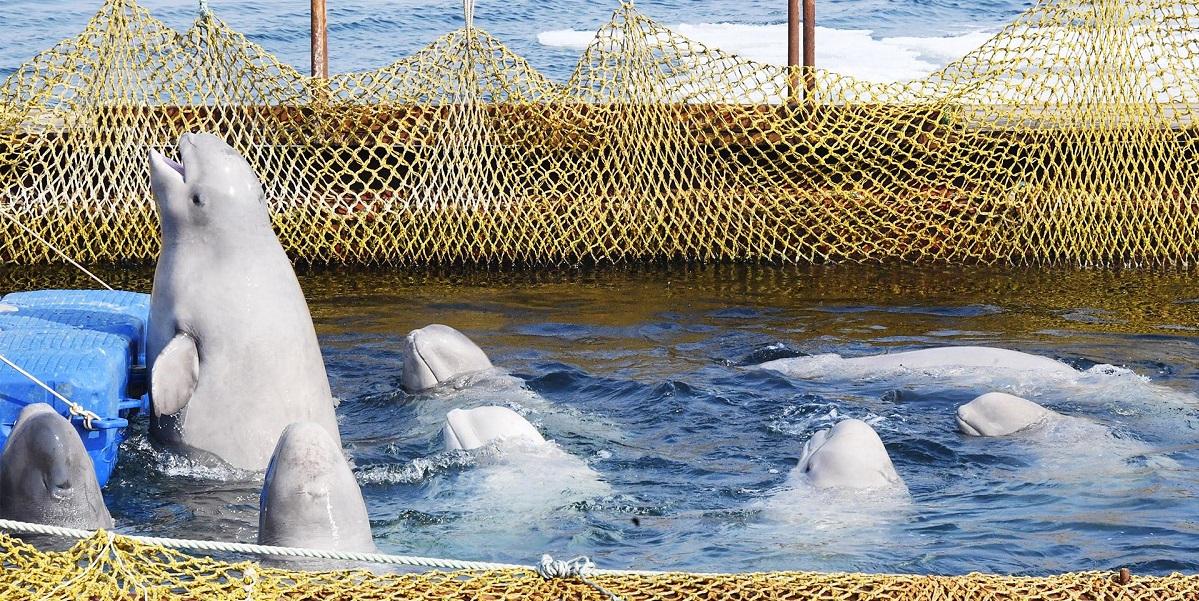 Вылов китов, утвердили закон, Гомдума, запрет