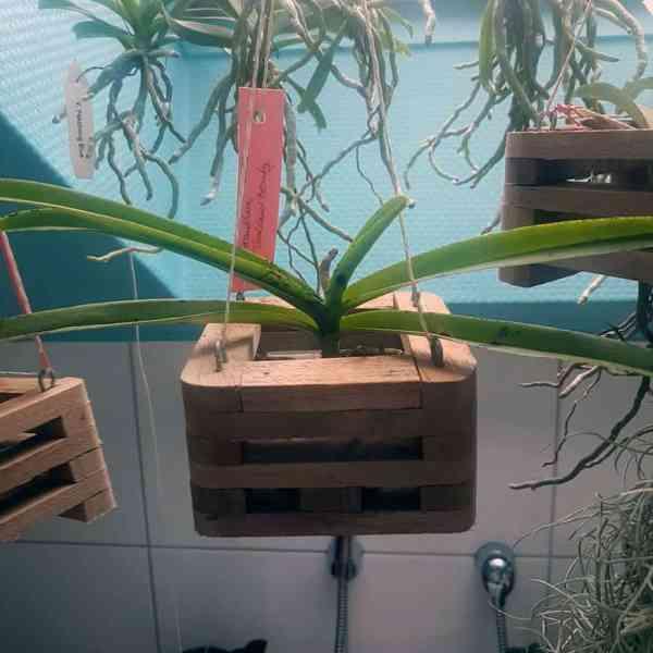 Aufhänger für Orchideenkörbe