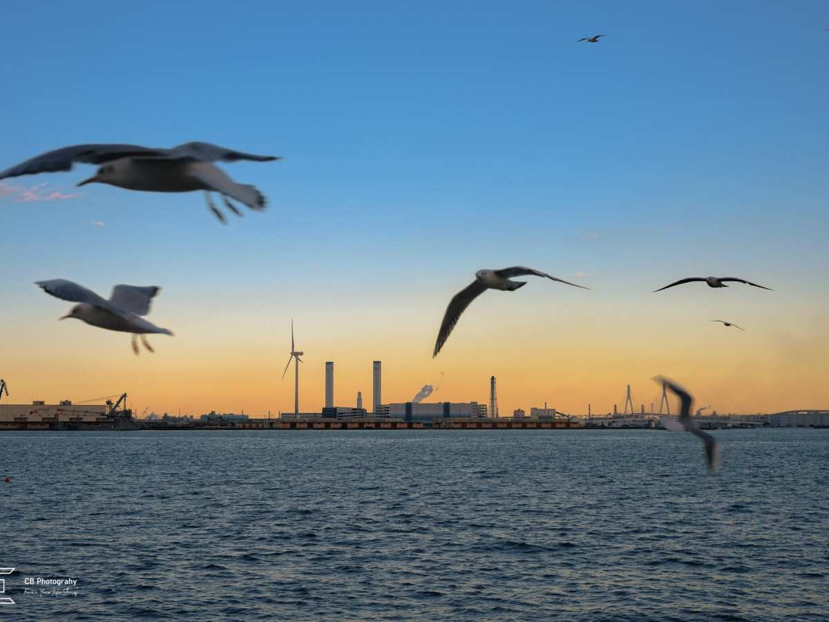 View of the Yokohama Bay during evening filled with flying seagulls