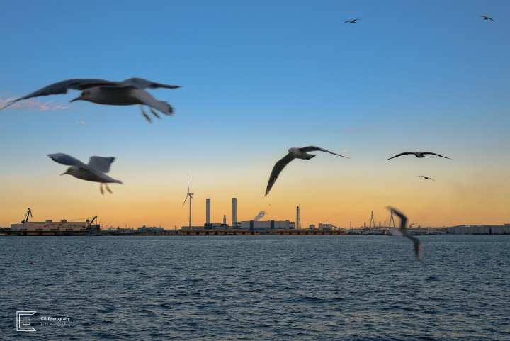 View of the Yokohama Bay during sunset, filled with flying seagulls. Photography by Cristian Bucur Photographer in Tokyo Metropolitan Area.