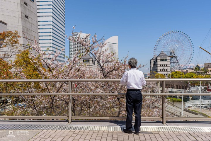 Man looking over Cherry Tree