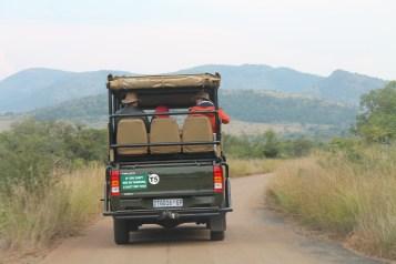 Safári - Nationa Park Pilanesberg. Southafrica.