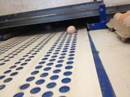 17 ouale se culeg pe banda