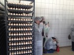 51 gaini tinute pentru oua