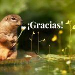La importancia de decir gracias