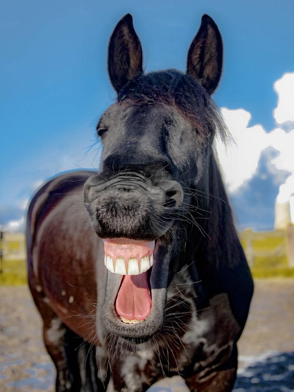 Una risata e via - tecniche di comunicazione politica