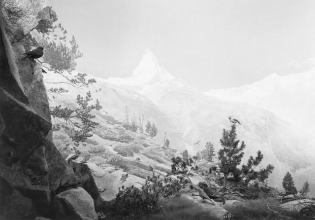 159_Birds-of-the-Alps-2012