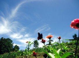 Câmp de flori