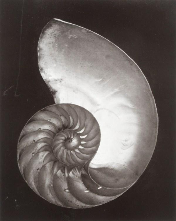 Edward Weston: His Life and Photographs [SIGNED] by Weston, Edward