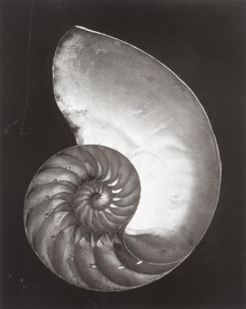 Edward weston fotografo biografia 100