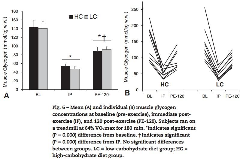 תכונות חילוף חומרים של עיבוד-Keto (20 חודשים) הספורטאים Ultra - הגליקוגן בשריר