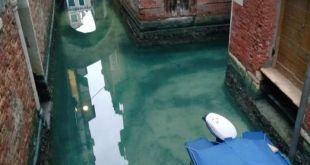 Venecia/animales/agua/cuarentena