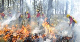 Van 11 incendios en Hidalgo durante 2020