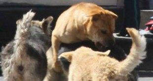 Capturas de animales en Pachuca, justificadas, dice regidora