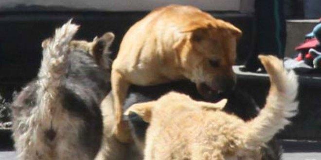 campaña redes evitar abandono mascotas