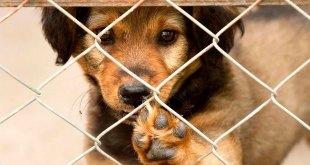 Animalistas anuncian evento virtual de adopciones en Pachuca