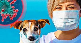 10 mitos sobre las mascotas y el coronavirus Covid-19
