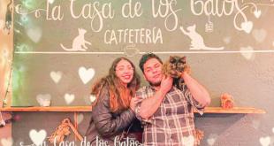 La Casa de los Gatos cafetería Pachuca