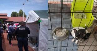 Atienden denuncia por venta de perros en Pachuca