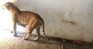 supervisar estado animales zoológico Tizayuca