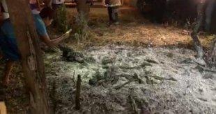 Encuentran dos piedras extrañas tras caída de meteorito en Tamaulipas