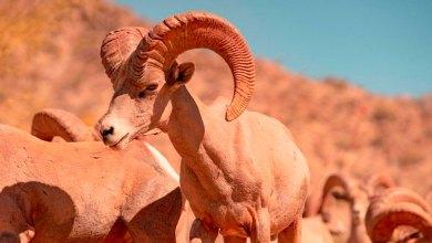 Cemex refuerza compromiso de conservación con liberación de especie