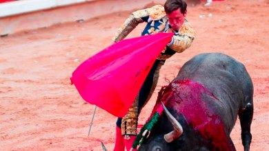 reforma protección animal Cdmx prohibir corridas toros