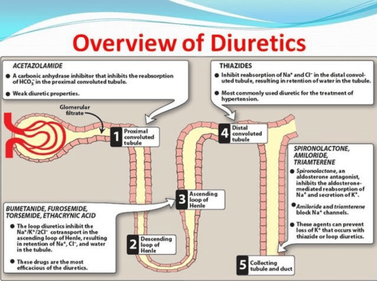 Diuretics Overview