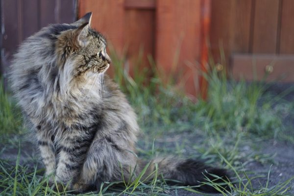 atlanta cat sitters