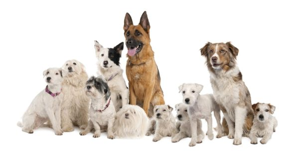 professional dog sitters GA