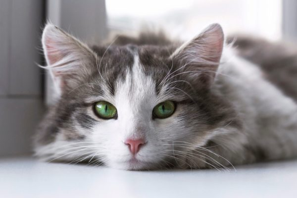 cat sitting atlanta