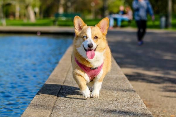 atlanta dog walking service