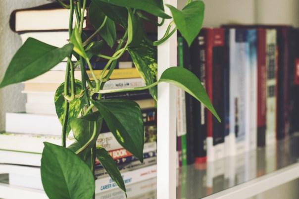 indoor plant care service ga