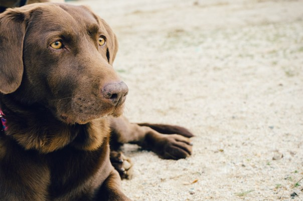 Pet Sitter for Old Dogs