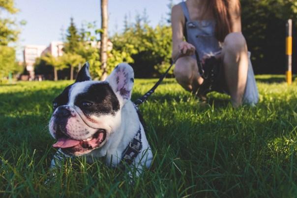 best dog sitters atlanta, ga