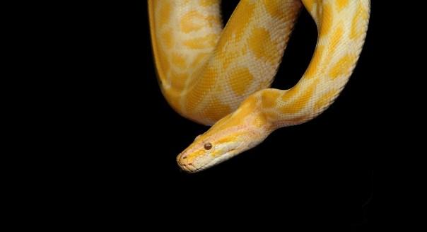 Snake Sitters in Atlanta