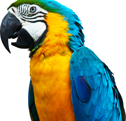 ParrotQuote