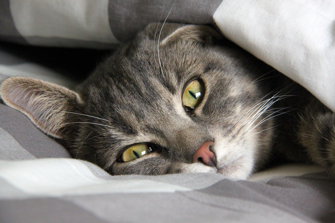 sleeping cat rest Critter Caretakers Pet Services Overnight Cat Sitting…Really? Really!