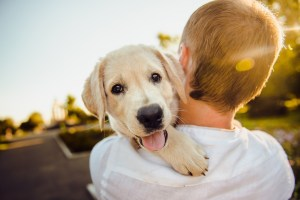 party pet attendant adorable smiling puppy dog cuddles