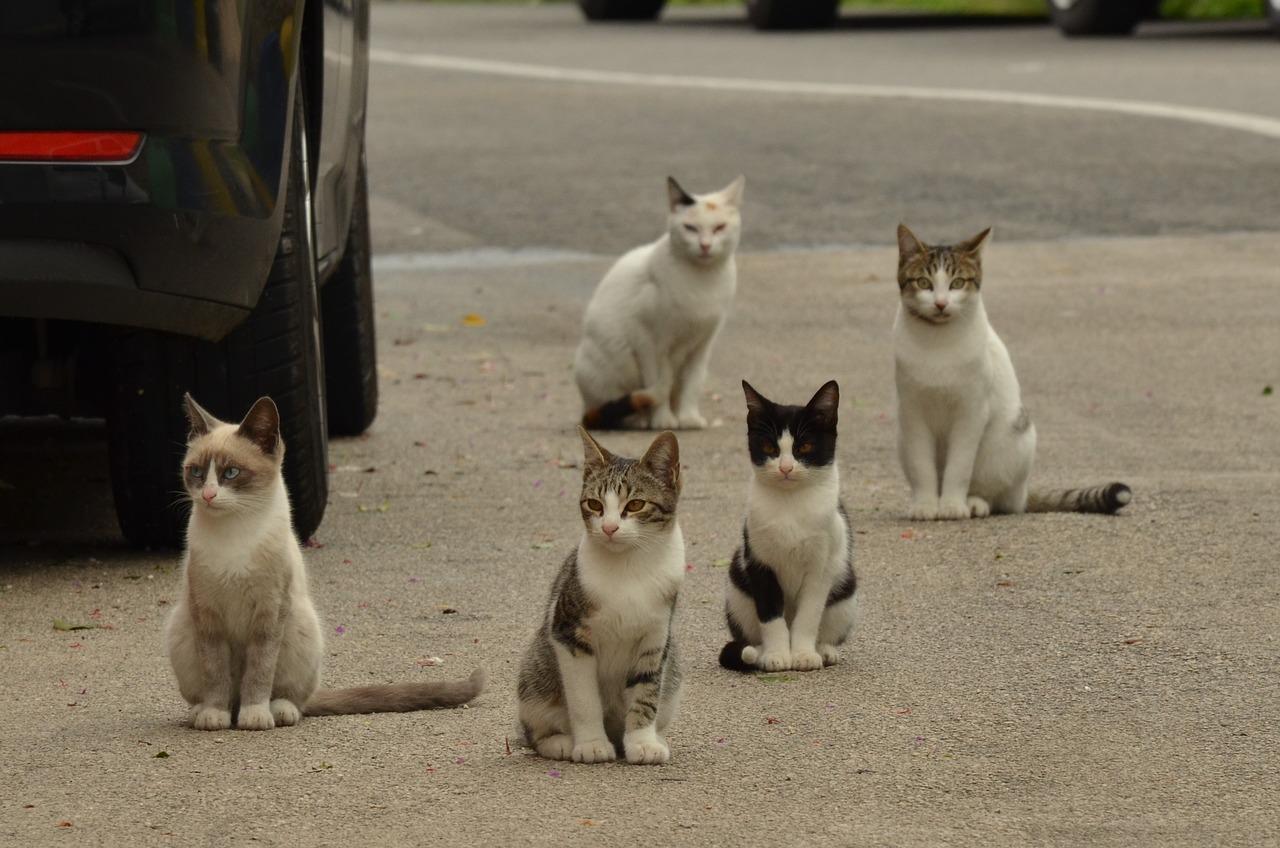cat street rescue animal Critter Caretakers Pet Services When Is A Gilbert Pet Sitter NOT A Pet Sitter?