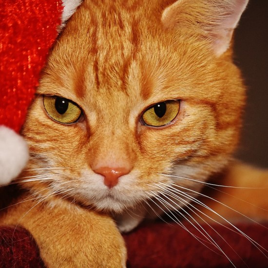 christmas cat hat pet life Critter Caretakers Pet Services Overnight Cat Sitting…Really? Really!