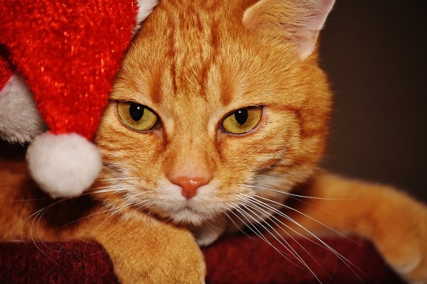 christmas cat hat pet life Critter Caretakers Pet Services Does a Pet Make a Good Holiday Present?