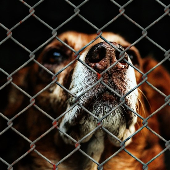 dog rescue cage wire welfare animal Critter Caretakers Pet Services Positive Reinforcement Training: What Is it? And Is It For You?