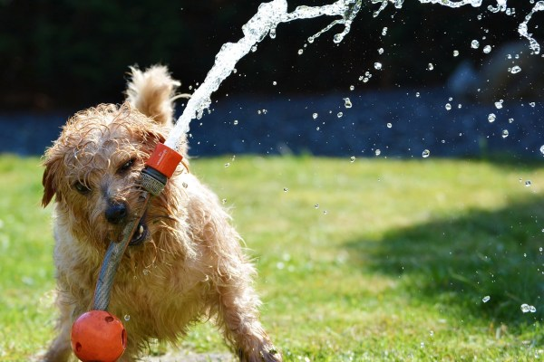 terrier dog hosepipe garden sun